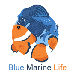 bluemarinelife